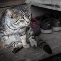 Котик в деревне. :: Андрей Самсонов