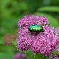 В ботаническом саду.... :: Raisa Ivanova