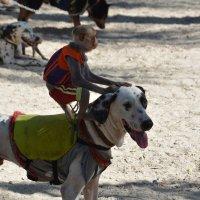 Гонки на собаках :: Paparazzi