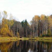 Озеро в лесу :: alen.kon К