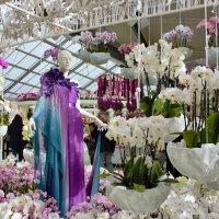 Павильон орхидей... :: ирина )))