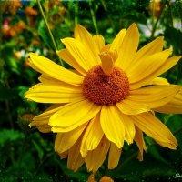 Жёлтый цветок :: Nina Yudicheva