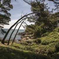 Начало тропы на Большой Пляж :: Gennadiy Karasev