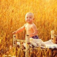 Пшеничка :: Светлана Светленькая