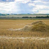 Сено в поле :: Олеся Ханина