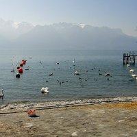 На Женевском озере :: Елена Павлова (Смолова)