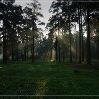 Утро в Подмосковном лесу :: Виктор Бондаренко
