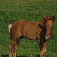 молоденький конь :: Сергей Цветков