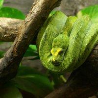Зеленый змей :: IURII