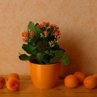 Каланхое и абрикосы :: Nina Yudicheva