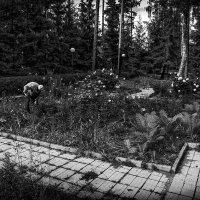 Старый садовник :: Игорь Герман