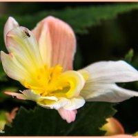 Цветок и муха :: Николай Волков