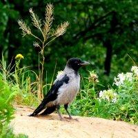 ворона в лесном интерьере :: Александр Прокудин