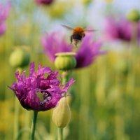 Он летал от цветка к цветку. :: Валентина Налетова