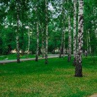 Русские берёзки :: Света Кондрашова