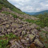июль в горах :: зоя полянская