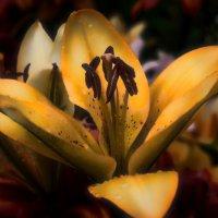 Цветок в ночи :: vladimir Bormotov
