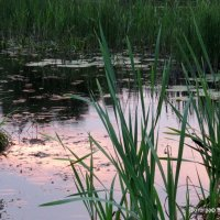 Лесное озеро на рассвете :: Владимир Филиппов