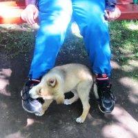 Специалист по развязыванию шнурков :: татьяна