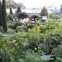 Ботанический сад :: Виктор Елисеев