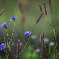 голубые огоньки :: Эльмира Суворова