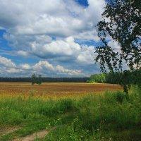 По-дороге, полевой среди колосьев спелой ржи :: Александр Лукин