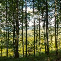 Сквозь лес :: Сергей Форос