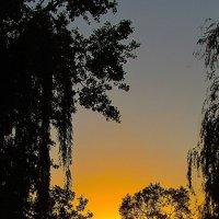 деревья влучах заката :: Марина