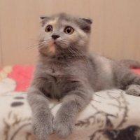 Кошка чуткая и верная, не обидит, не предаст  .... :: Людмила Богданова (Скачко)