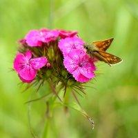 Бабочка :: ProfIT