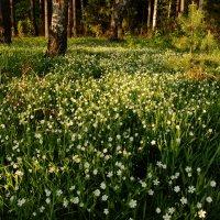 На лесной полянке :: Валерий Толмачев
