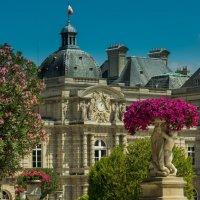 Люксембургский сад :: Анастасия Елкина