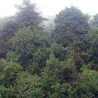 А дождь идет! :: Елена Перминова
