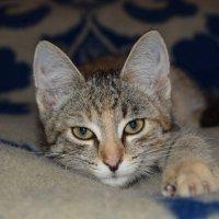 Кошачий вечер :: A. SMIRNOV