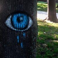 Когда деревья плачут :: Сергей Рубан