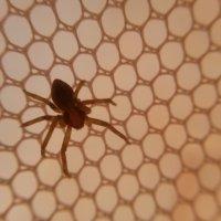 паук :: DIMA GROMOV