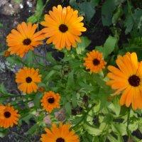 Оранжевое лето. :: zoja