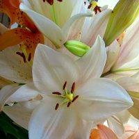 Цветы невесты :: Сергей Карачин