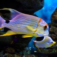 Рыбки :: Николай П
