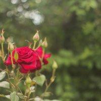 Красоты лета :: Мария Фокина