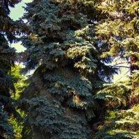 =) :: Серёга Марков