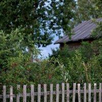 """""""Созрели вишни в саду у дяди Вани..."""" :: WADIM *****"""