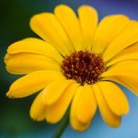 Цветок :: Татьяна Петрова