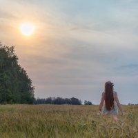 Закат в полях :: Павел Шрайбикус