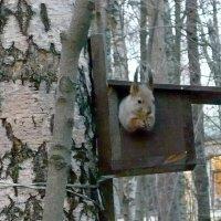 Я слушаю Вас! :: Вера Щукина