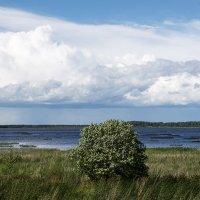 Умирающее озеро Цевло :: Нелли Денисова