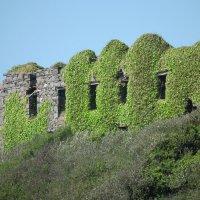 Стена древнего замка :: Natalia Harries