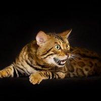 почти тигр :: Елена Волгина