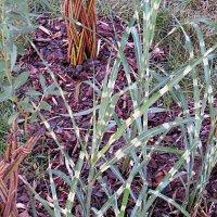 Трава :: татьяна петракова