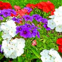 Цветов благоухание :: Анастасия Белякова